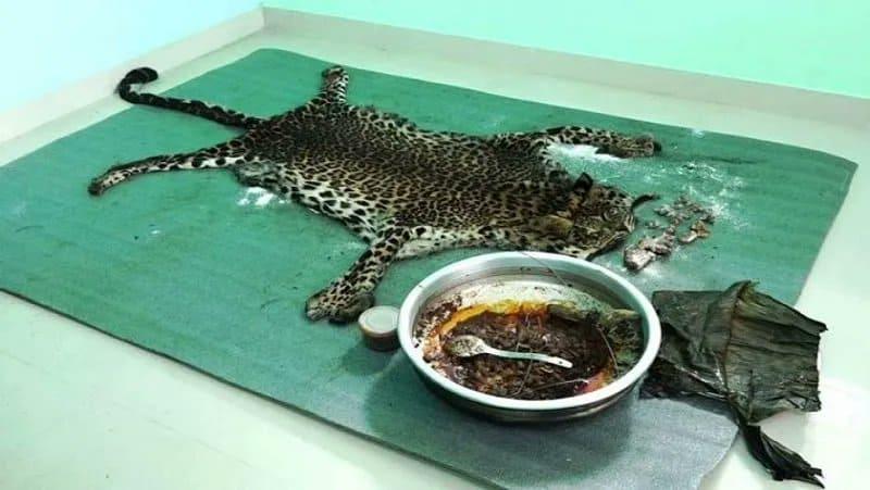 cheetah killed - updatenews360