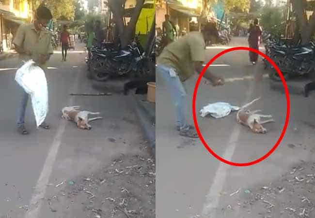 dog madurai - updatenews360