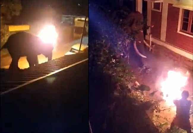 elephant fire - updatenews360