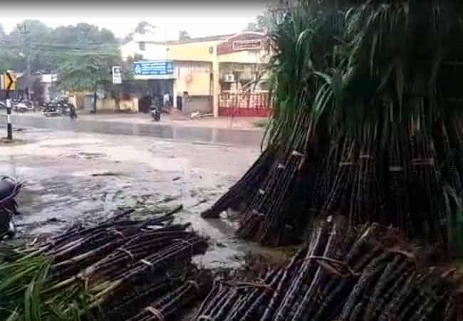 sugarcane - updatenews360