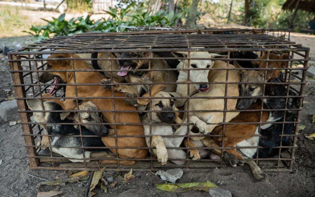 Cambodia_Dogs_Rescued_UpdateNews360