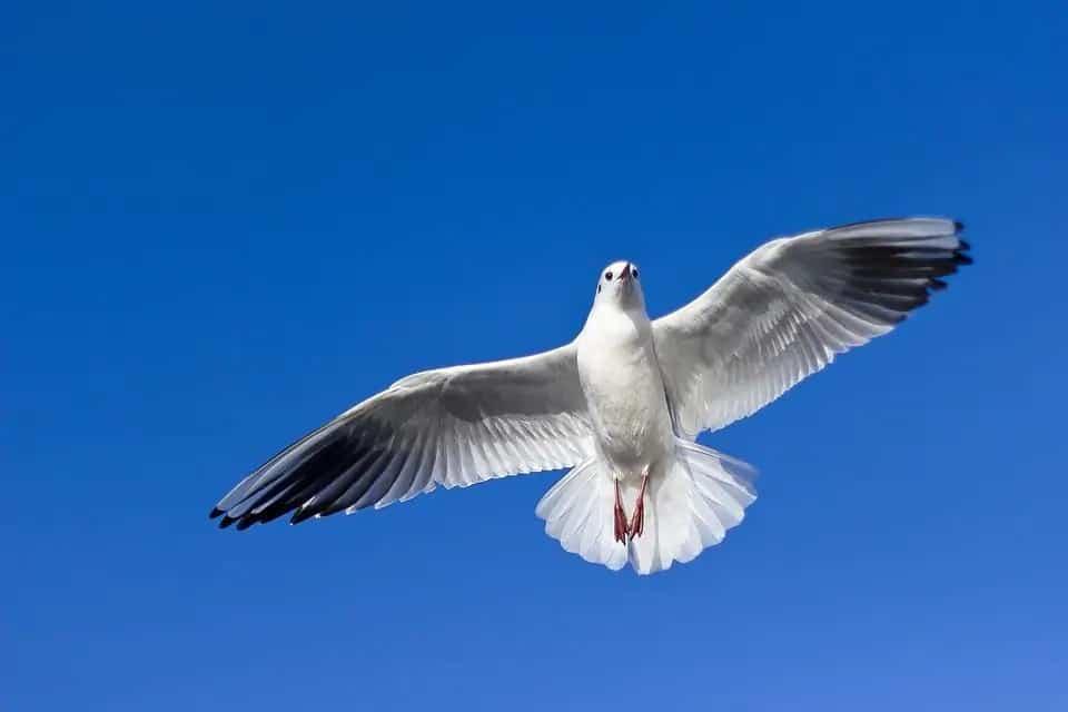 Sea Gull - Updatenews360