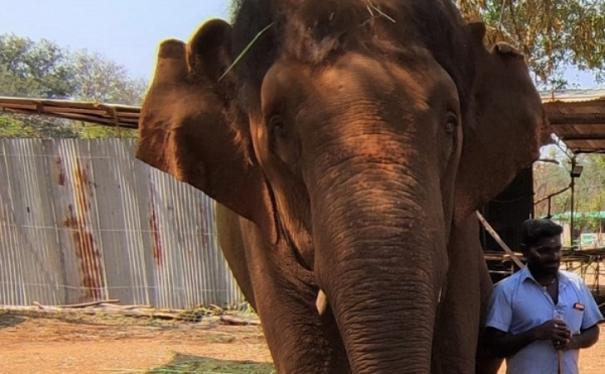 aandal elephant - updatenews360
