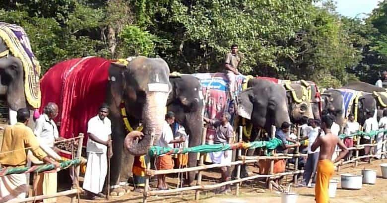elephant camp - updatenews360