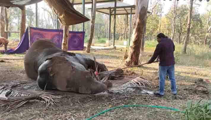 Elephant Dead -Updatenews360