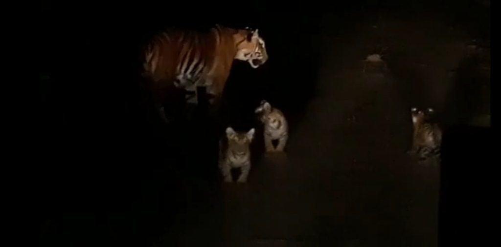 cbe tiger - updatenews360