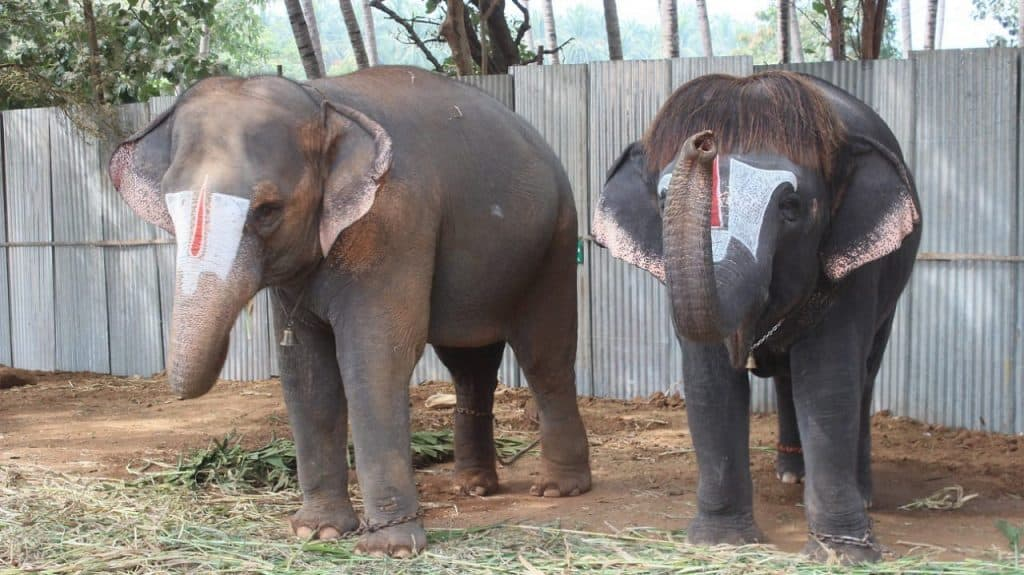 elephant6 - updatenews360