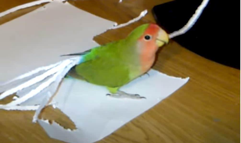 parrot tail - updatenews360