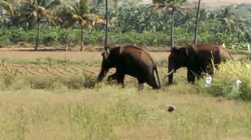 Sirumugai Elephants -Updatenews360