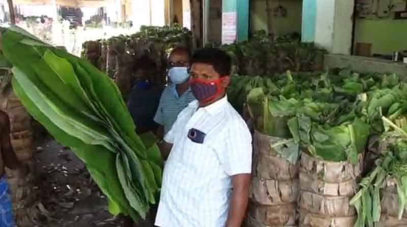 banyan Leaf -Updatenews360