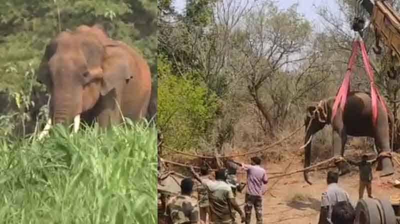 elephant caught -Updatenews360