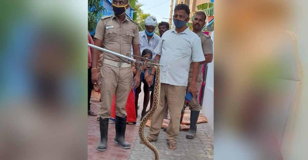 kumari snake - updatenews360