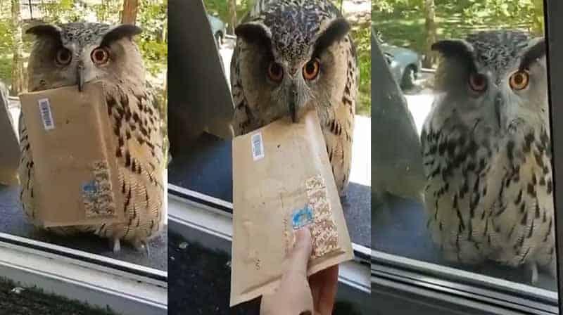 owl final - updatenews360