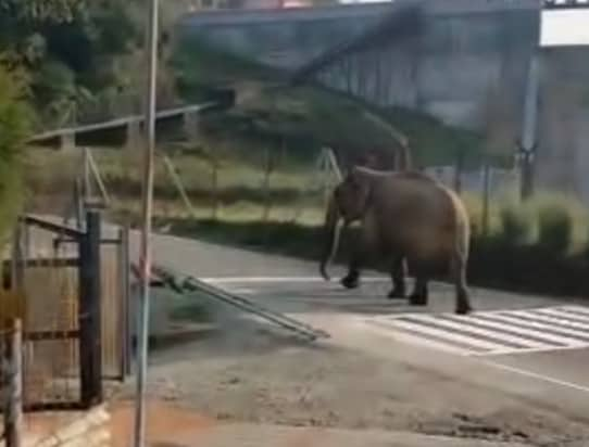 theni elephant- pdatenews360