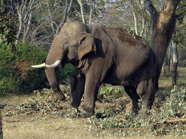ELEPHANT_Updatenews360