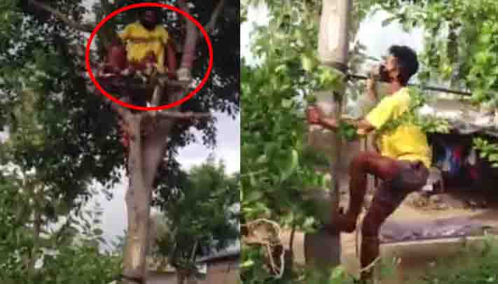 Man Isolate In Tree -Updatenews360