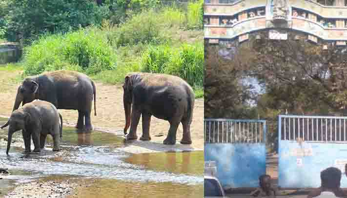 Viscose Elephants- Updatenews360