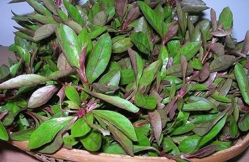 health benefits of ponnanganni keerai