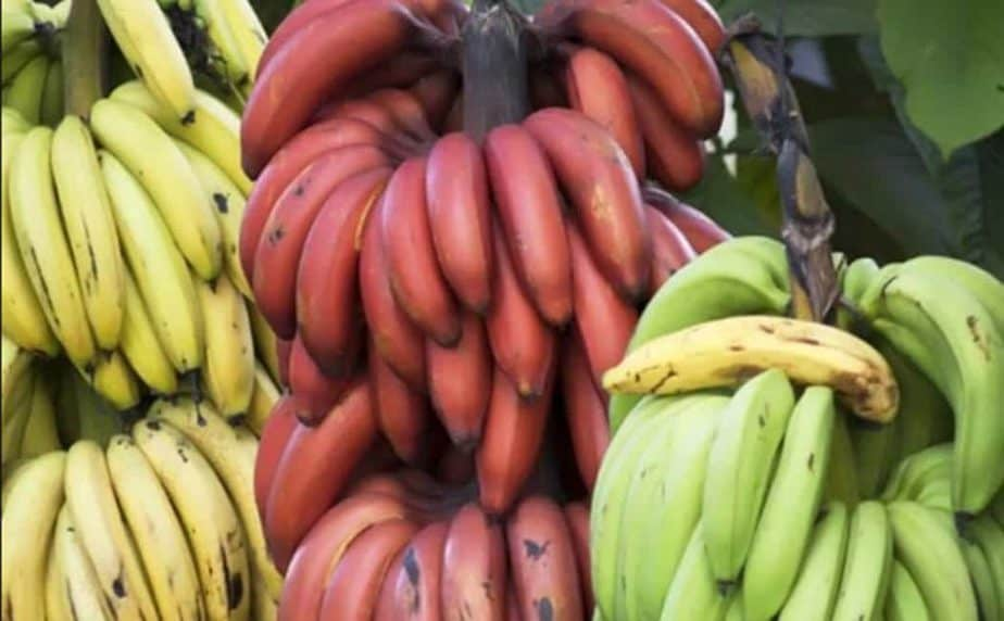 health benefits of red banana in tamil