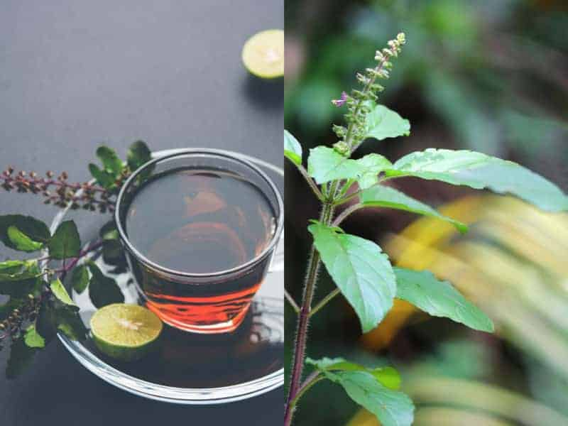 how to make tulsi tea at home
