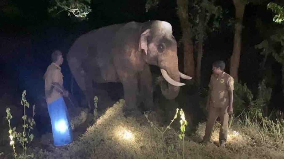 Bahubali Elephant- Updatenews360