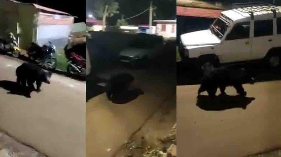Bear Cat walk - Updatenews360