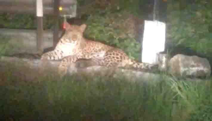 Leopard -Updatenews360