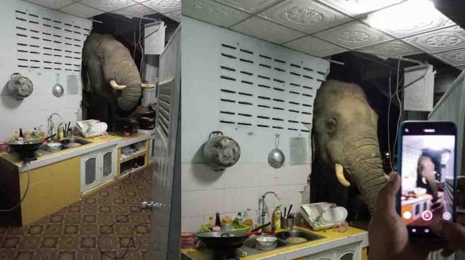 Thailand Elephant - Updatenews360