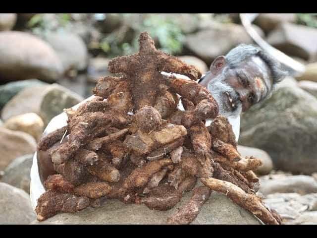 mudavattukaal kizhangu benefits in tamil