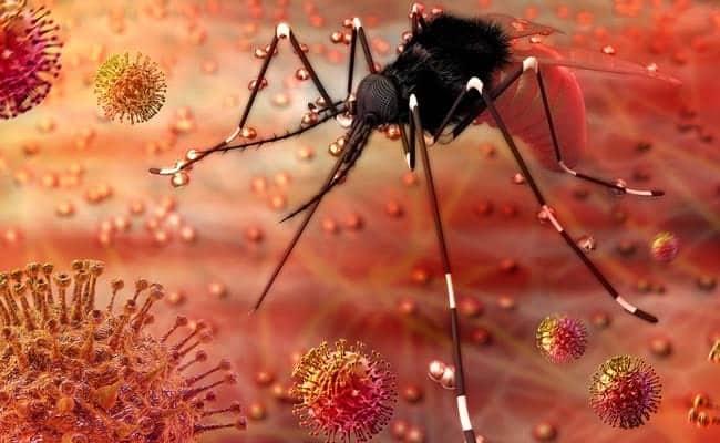 zika virus symptoms, treatment explained