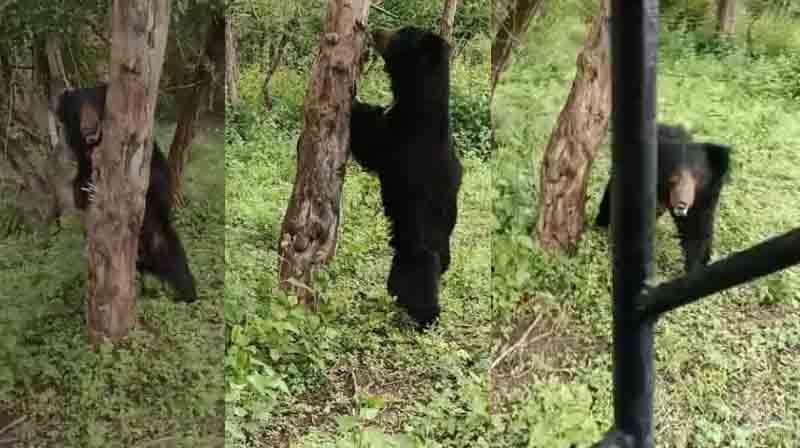 Bear Attack - Updatenews360