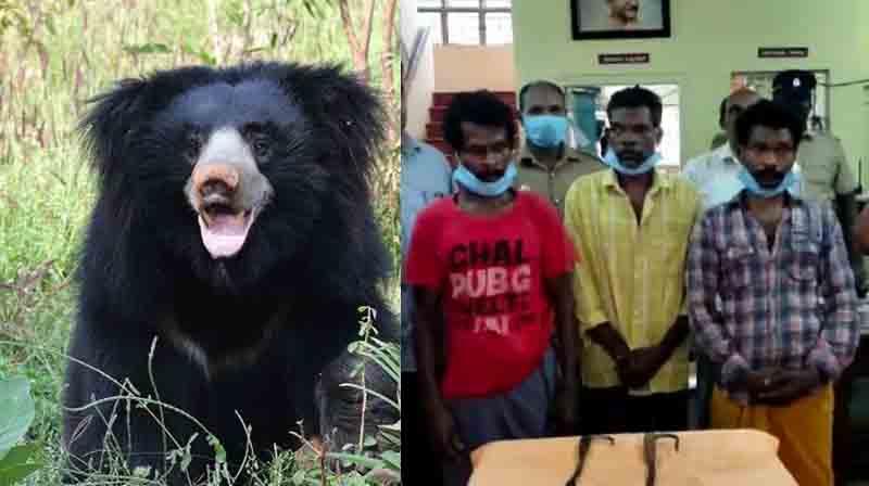 Bear Murder Case arrest -Updatenews360