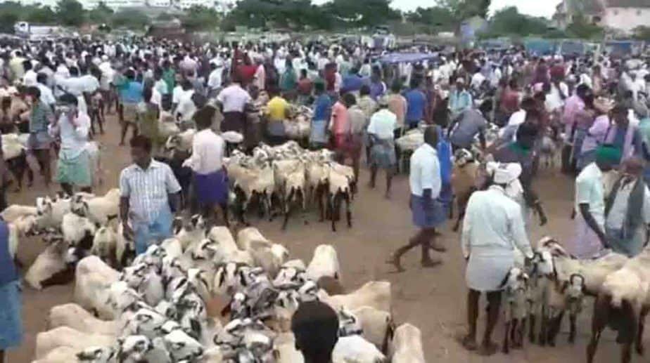 Goat Market - Updatenews360