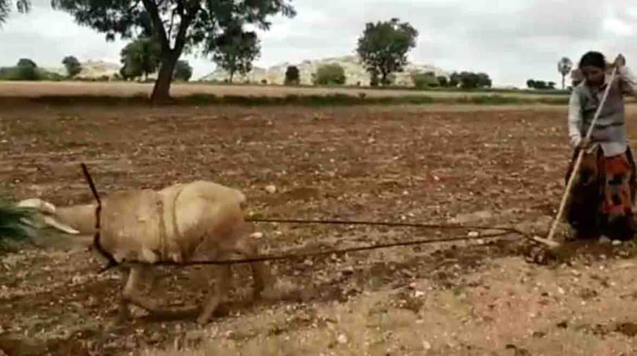 Goat Using- Updatenews360
