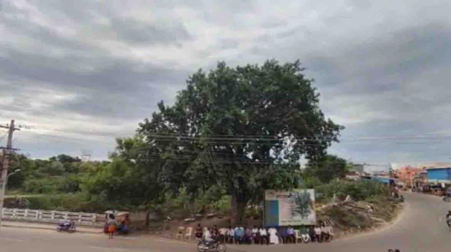 Tree Bday- Updatenews360