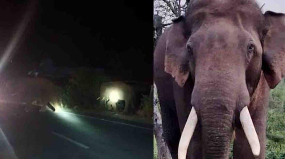 bahubali Elephant - Updatenews360