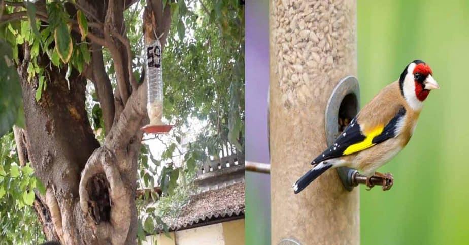birds feed cover - updatenews360