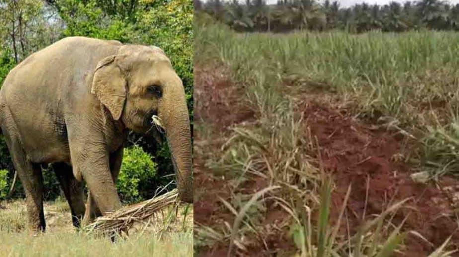 elephant Damages - Updatenews360