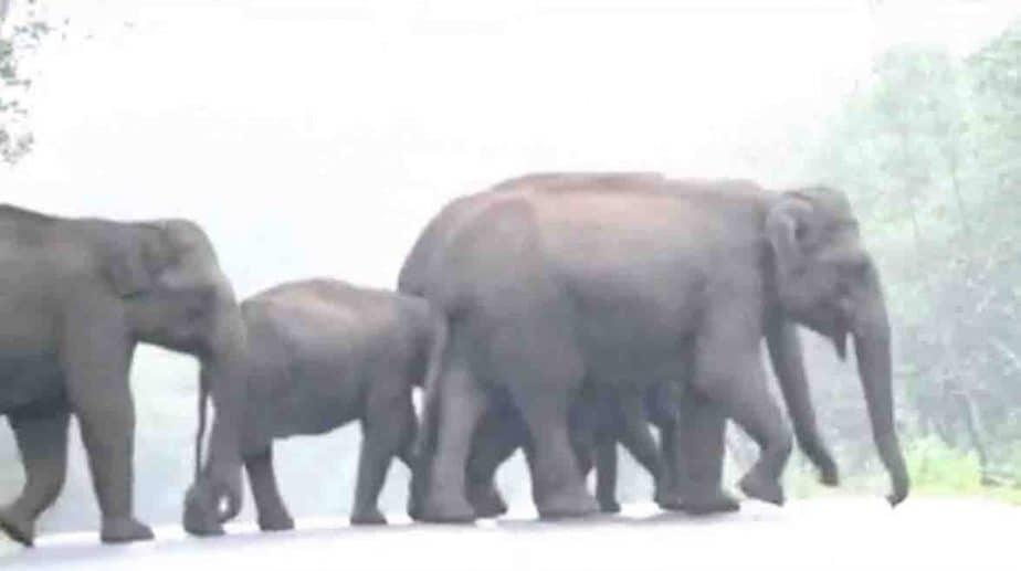 elephant Njoy - Updatenews360