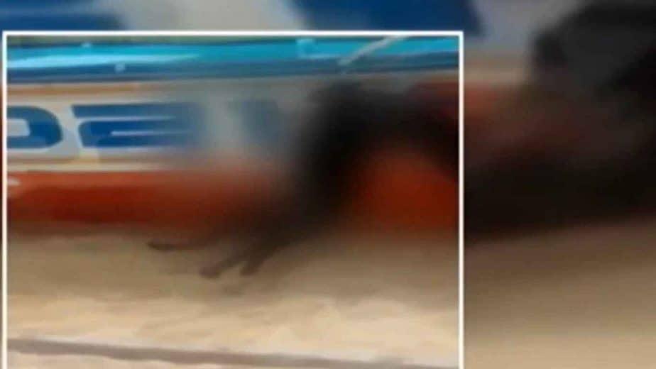 kerala dog 1 - updatenews360