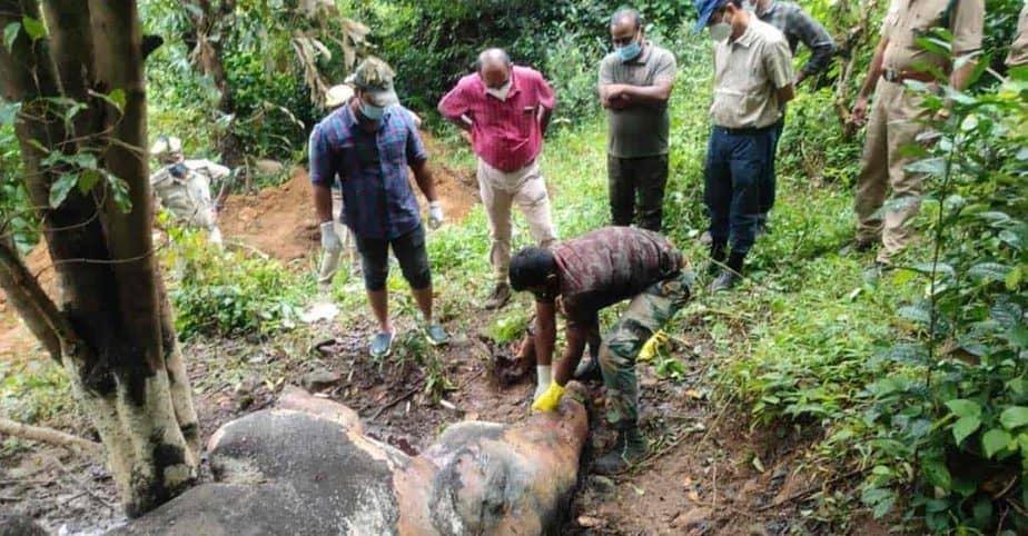 kumari elephant 1- updatenews360