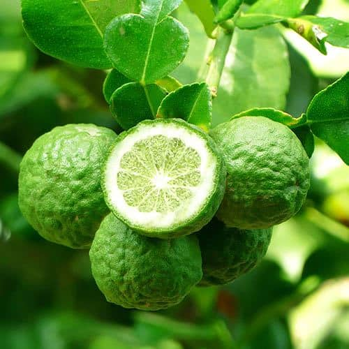 medicinal uses of citron leaves in tamil