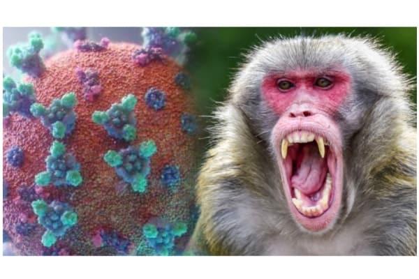 monkey virus - updatenews360