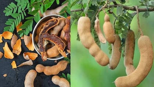 From boosting immunity to shedding kilos, reasons to have tamarind