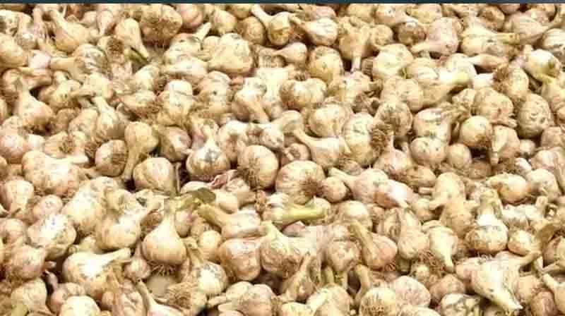 Garlic - Updatenews360