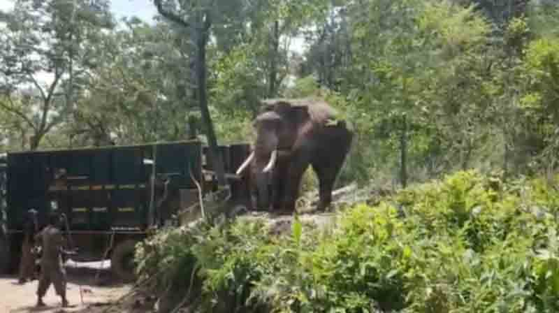 Rivaldo Elephant - Updatenews360
