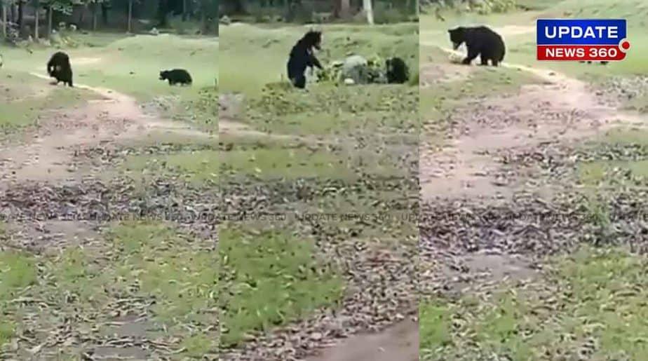 Bear Play Foot Ball -Updatenews360