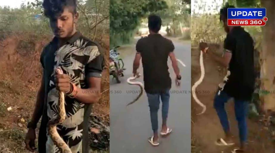Indian Python Caught -Updatenews360