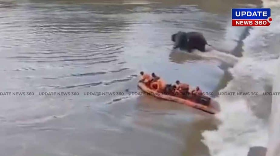 elephant river - - updatenews360