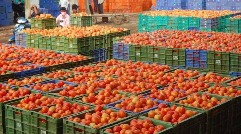 Tomato Price-Updatenews360